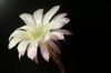 Flower_002_2