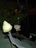 night_lotus_002