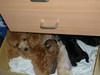 puppy_005